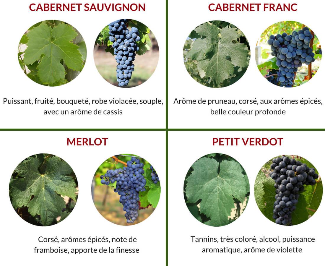 vin medoc cépages