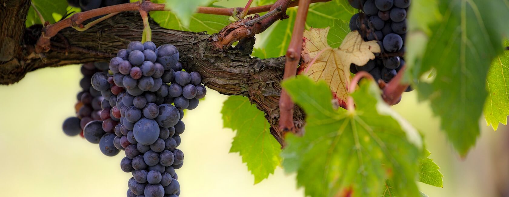 vin moulis en medoc